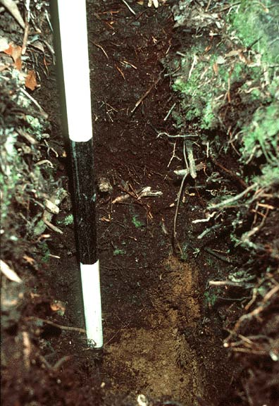 NPP Tropical Forest  John Crow Ridge  Jamaica  1974-1978Forest Soil Profile