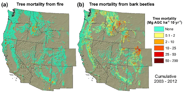 Tree Mortality from Fires and Bark Beetles at 1-km Resolution ...