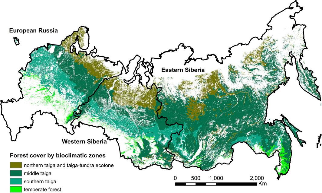 Map Of Russia In Russian.Distribution Of Young Forests And Estimated Stand Age Across Russia