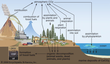 biogeochemical cycle diagram