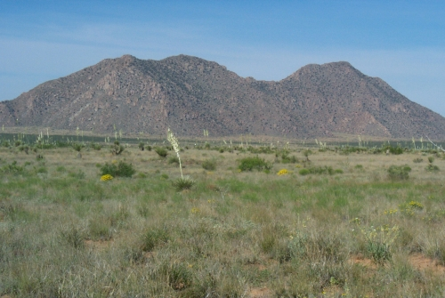 Chihuahuan Desert, Las Cruces, NM, USA