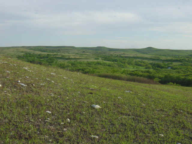 picture of Konza Prairie